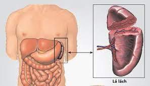 Nguyên nhân của chứng phình động mạch lách như thế nào?